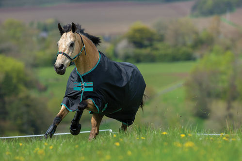 Paddockdecke Outdoord. Horseware Amigo Hero 900D Fleece Lined 50g black 125 130 140 145 155 160